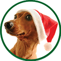 dog wearing a Santa hat icon.